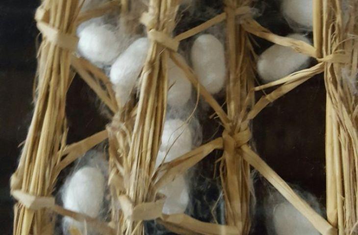 Seidenraupen spinnen ein Kokon in der Tomioka Silk Mill bei Tokio